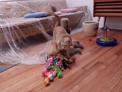 Pi surveying her toys.