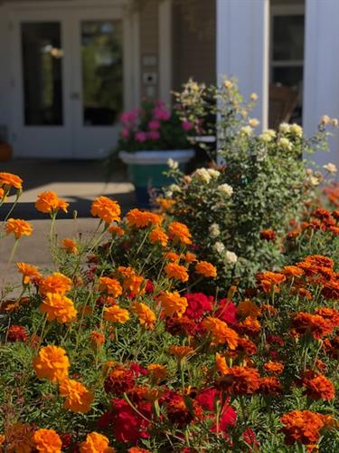 Marigolds and foliage at front entry