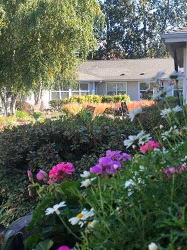Our serene courtyard garden
