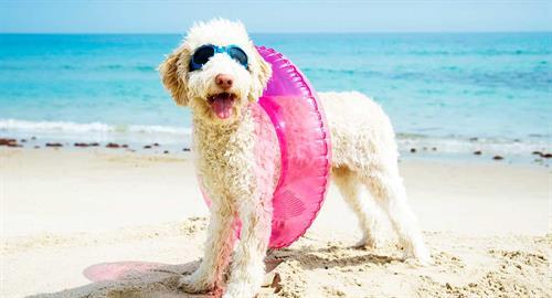 Gallery Image dog_beachy_tube.jpg