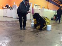 DePAW Dog Agility 101 for Fun - 6 weeks