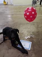 DePAW Dog Basic Obedience Group Class- 9 weeks