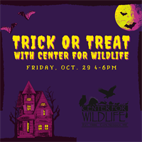 Wild Trick or Treating at Center for Wildife