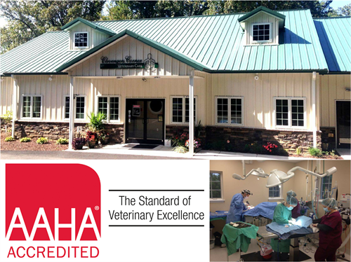 Only AAHA-Accredited Practice in Culpeper County