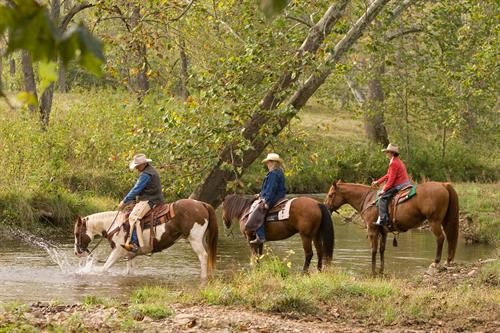 Guided Horseback Rides