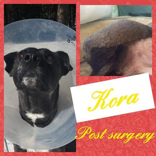 Kora Post Surgery