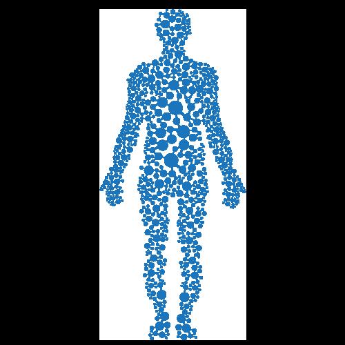 TThe Endocannabinoid System