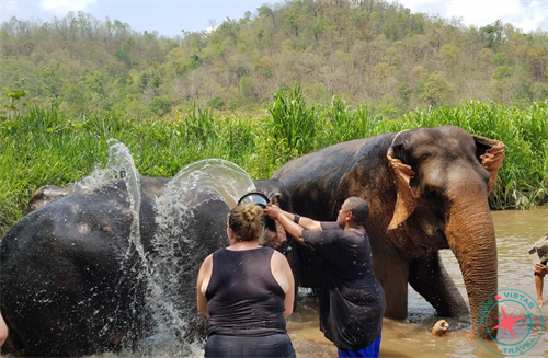 Playing in the river with rescue elephants in Thailand