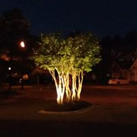 crepe myrtle trees