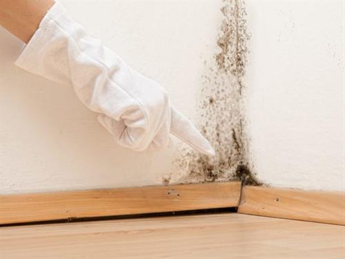We love mold! (To remove it that is!)