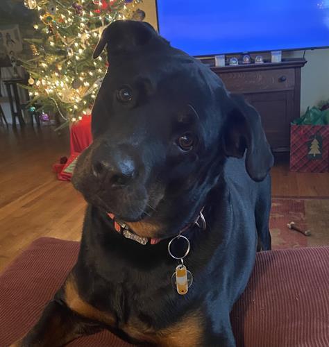 My Rottweiler, Tripp