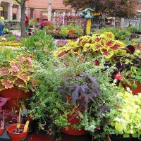 Invite Nature to Your Yard! - West Chicago Public Library