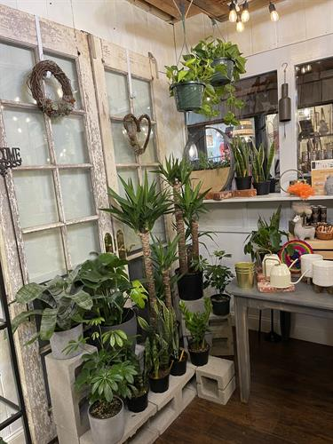 Come check out our variety of houseplants!