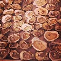 Fresh Gulf Oysters