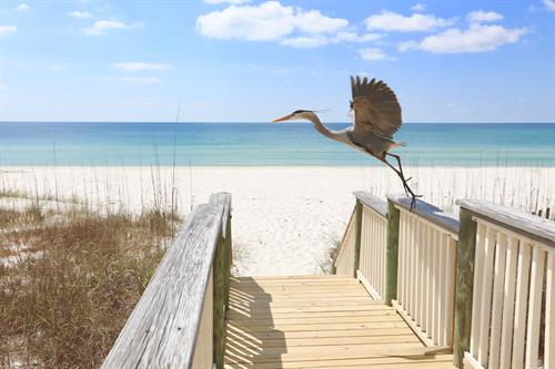 Need Photos that show off the local vibe? We love capturing the beauty of the Gulf Coast with our photos. Image available for sale online at CactiPalm.com