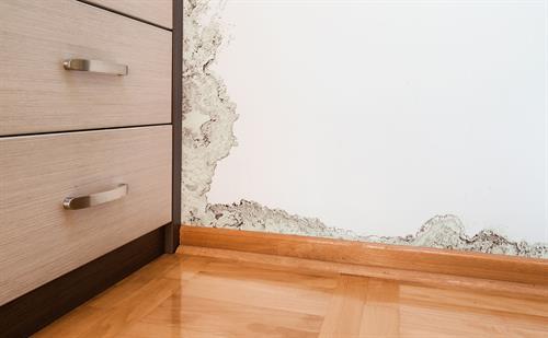 We remediate mold damage too!