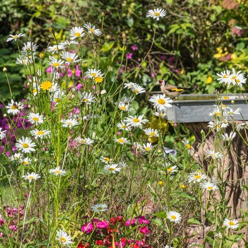 Gallery Image Bird-Bath.jpg