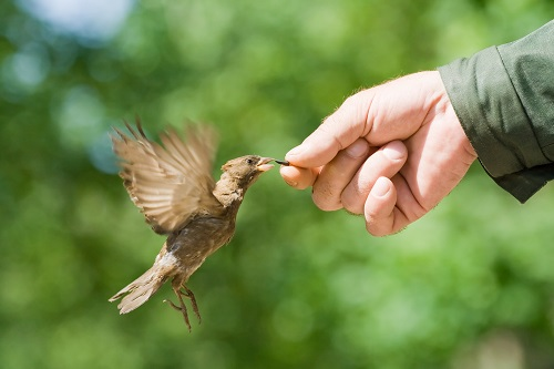 Gallery Image Bird-Eating-Out-Of-Hand-500x333.jpg