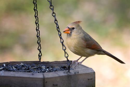 Gallery Image Bird-Feeder-2.jpg