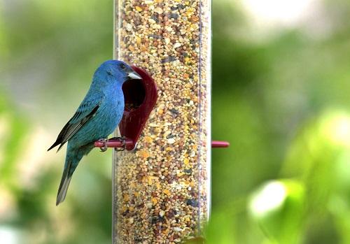 Gallery Image Bird-Feeder-500x349.jpg