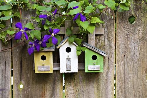 Gallery Image Birdhouses-500x333.jpg