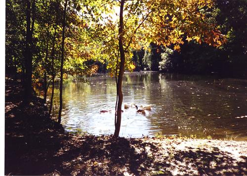 Pond on Available Land for Sale