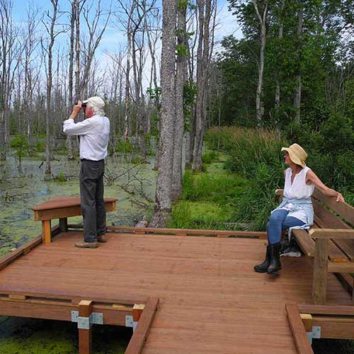 Wildlife viewing platform