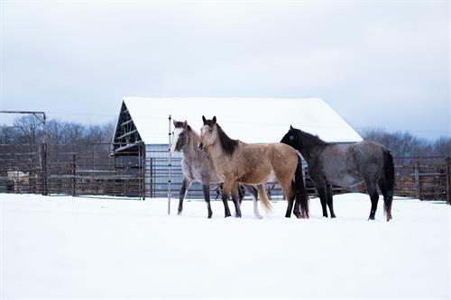 Mares on a crisp winter landscape