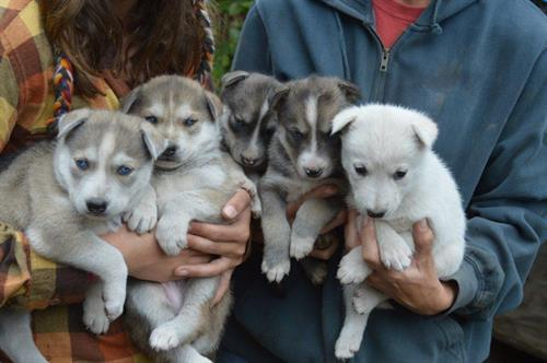 Gallery Image puppies.jpg