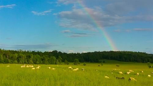A rainbow graces the fields at Happy Hollow Creamery in Bayfield, WI.