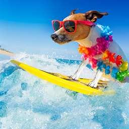 Gallery Image Dog_on_surf_board.jpg