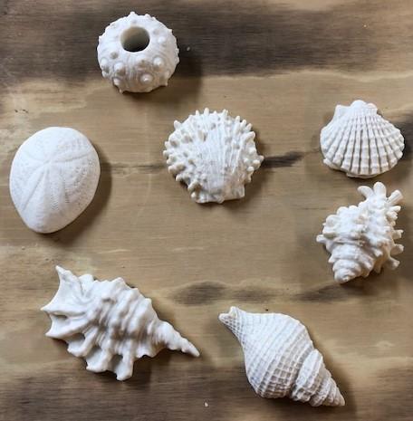 Seashell Oatmeal Soaps