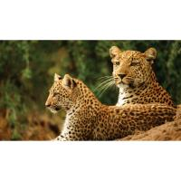 2021 Travel - Southern African Safari FREE Information Session