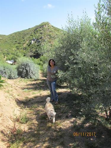 Dos Pizotes Grove