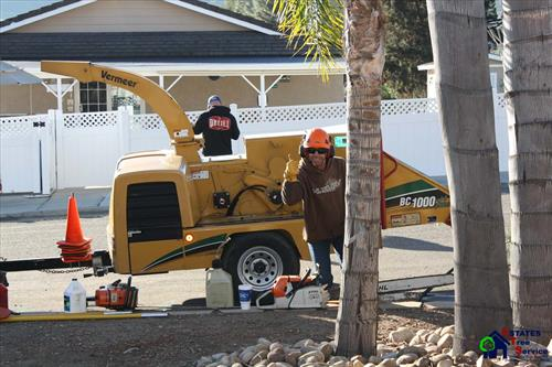 Estates Tree Service in Poway