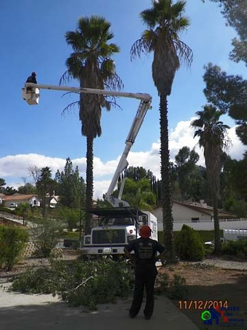 Poway Palm Tree Trimming