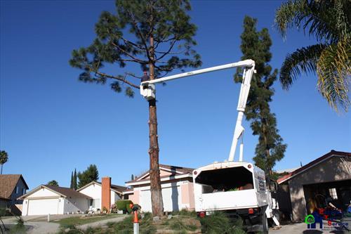 Poway Tree Removal