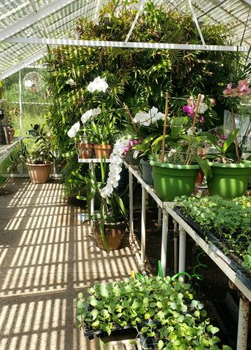 The greenhouse is part of our Horticulture Therapy Program