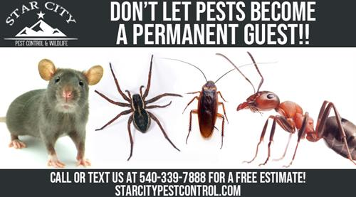 Don't let pests become a permanent guest! Call or text Star City Pest Control at 540-339-7888!