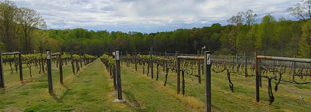 Fables & Feathers Winery