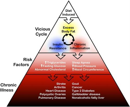 Cascade of health problems from excess body fat