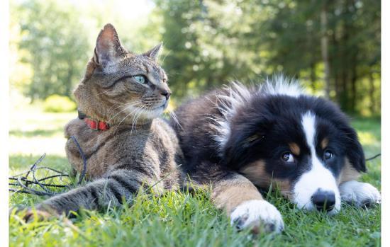 Animals, Pets & Veterinary