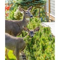 Deer-Resistant Plants Class at Spring Creek Gardens
