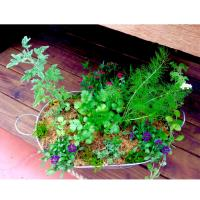 Herb Garden in a Tub Class at Spring Creek Gardens