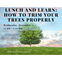Lunch and Learn - How to Properly Trim Your Trees