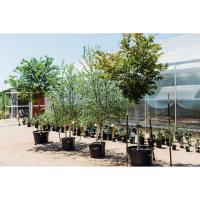 Tree Sale at Spring Creek Gardens