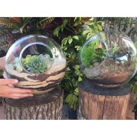Glass Bowl Terrarium Class @ Spring Creek Gardens