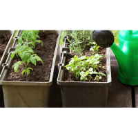 In-person: Small Container Gardening