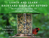 Lunch and Learn - Backyard Birds and Beyond