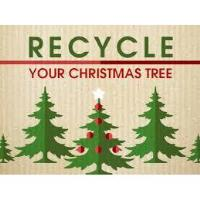 Recycling Center now accepting live Christmas trees, garland